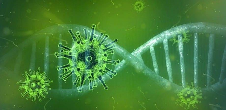 ce sunt coronavirusurile