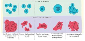 diferente celule canceroase si necanceroase