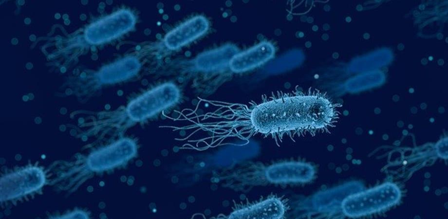 infectia cu e coli