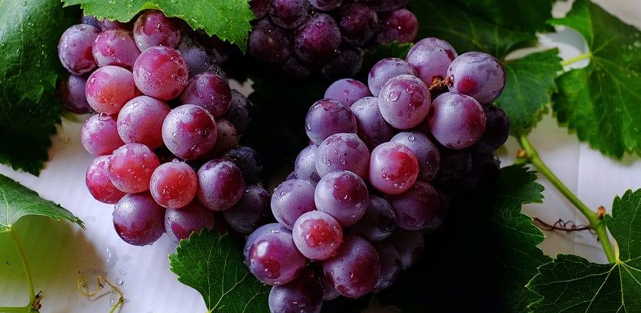 fructele si cancerul
