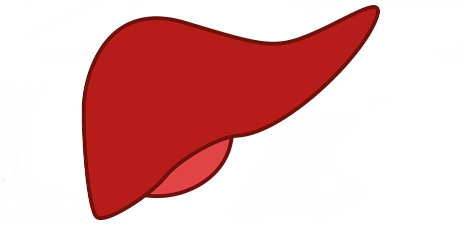 functiile ficatului